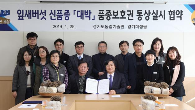 경기도농기원, 잎새버섯 신품종 '대박' 농가 본격 보급